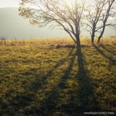 leaveless trees