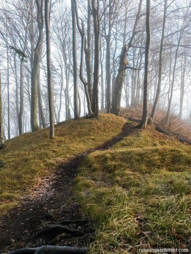 path emerging from fog